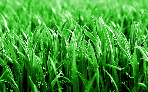 image of greener grass
