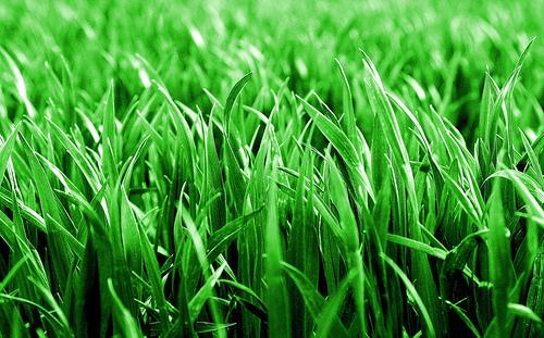 image of greener grass